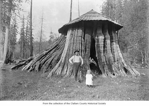 Cedar tree stump hut used as the Elwha Post Office